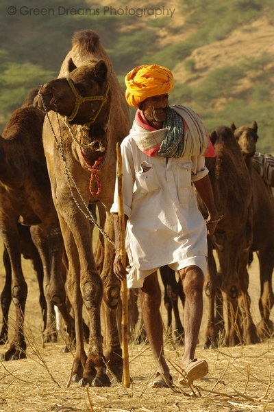 Camel Trader - Pushkar Fair